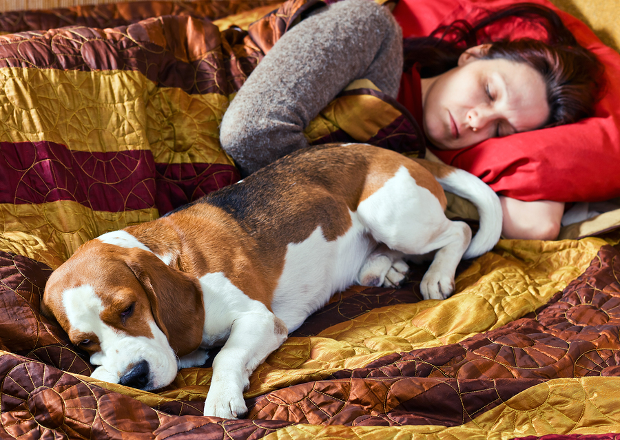 bigstock-The-Sleeping-Woman-And-Its-Dog-37753474
